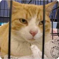 Adopt A Pet :: Pumpkin - Riverside, RI