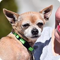 Adopt A Pet :: Gilligan - Meridian, ID