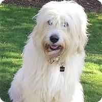 Adopt A Pet :: Bristol - Alpharetta, GA