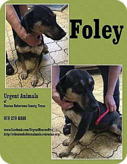 Hound (Unknown Type) Mix Dog for adoption in Hearne, Texas - Foley