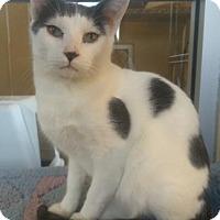 Adopt A Pet :: Geo - Fredericksburg, TX