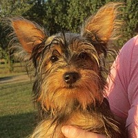 Adopt A Pet :: Emma - Westport, CT
