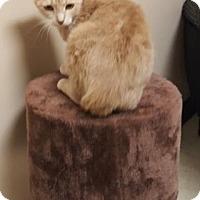 Adopt A Pet :: Starfire - Americus, GA