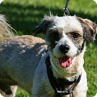 Adopt A Pet :: Matthew - Carlsbad, CA