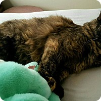 Adopt A Pet :: Mia - Knoxville, TN
