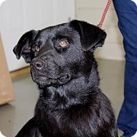 Adopt A Pet :: Rosco - Cedar Bluff, AL