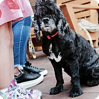 Adopt A Pet :: Bernice - Los Angeles, CA