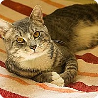 Adopt A Pet :: Sam - Lancaster, MA