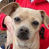 Adopt A Pet :: Money - Athens, GA