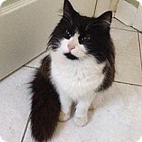 Adopt A Pet :: Emma Jean - Monroe, GA