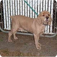Adopt A Pet :: Cody - Tacoma, WA