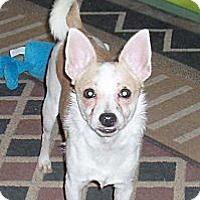 Adopt A Pet :: Taco Bell - Phoenix, AZ