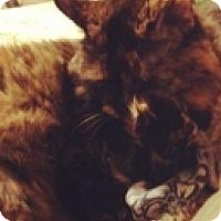 Adopt A Pet :: Munster - Vancouver, BC