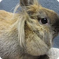 Adopt A Pet :: Gertie - Newport, DE