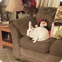 Adopt A Pet :: Nike and Libra - Williston, FL