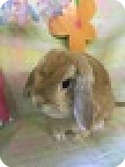 Lop-Eared Mix for adoption in Paramount, California - Ms Annabelle