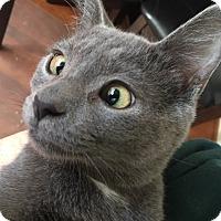Adopt A Pet :: Petey- Adoption Pending - Arlington, VA