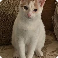 Adopt A Pet :: Albert - Sweetheart - East Hanover, NJ