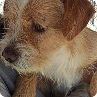 Adopt A Pet :: Gump - Las Vegas, NV