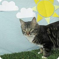 Adopt A Pet :: Loon - Lloydminster, AB