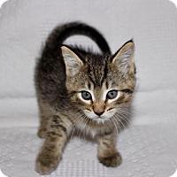 Adopt A Pet :: Nunzio - Pendleton, NY