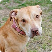 Adopt A Pet :: Halo - Spring Lake, NJ