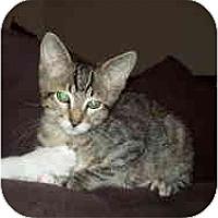 Adopt A Pet :: Little Bean - Davis, CA