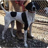 Adopt A Pet :: Andy - Midland, NC
