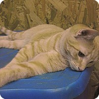 Adopt A Pet :: Thomas (aka TomTom) - Acworth, GA