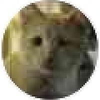 Adopt A Pet :: Pedro - Pendleton, OR