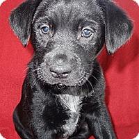 Adopt A Pet :: Kisses - Hadley, MI