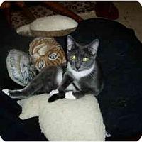Adopt A Pet :: Howard - Little Rock, AR