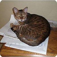 Adopt A Pet :: Shirley - Lantana, FL