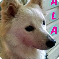 Adopt A Pet :: Nala - Elmhurst, IL