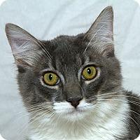 Adopt A Pet :: Izzy V - Sacramento, CA