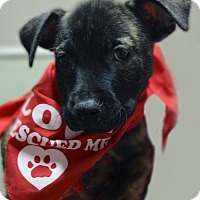 Adopt A Pet :: Timmy - Burleson, TX