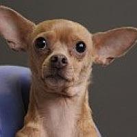 Adopt A Pet :: Annie - Georgetown, CO