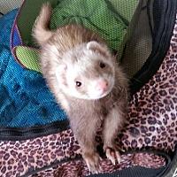 Adopt A Pet :: MARLEE & CELESTE - Brandy Station, VA