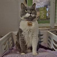 Adopt A Pet :: Gazou - Montreal, QC