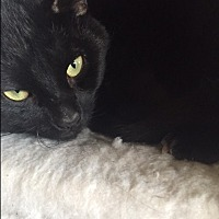Adopt A Pet :: Cheeks - Elyria, OH