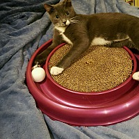 Adopt A Pet :: ALLEY - Glen cove, NY