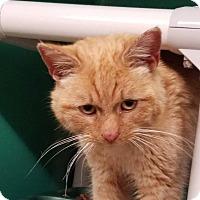 Adopt A Pet :: Clark - Somerset, PA