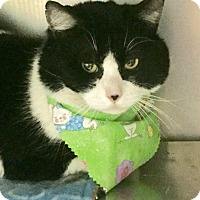 Adopt A Pet :: Statler-Happy Spring to You! - Manchester, NH