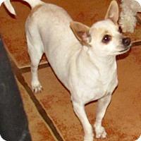 Adopt A Pet :: Shanti - Tucson, AZ