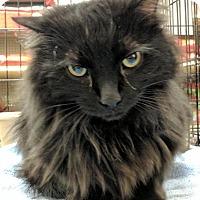 Adopt A Pet :: Cosmo - Sacramento, CA