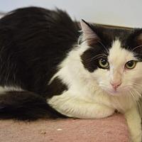 Adopt A Pet :: Cliff - DFW Metroplex, TX