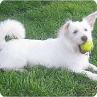 Adopt A Pet :: Fred - Arlington, TX