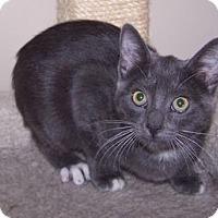 Adopt A Pet :: K-Rescue4-Callista - Colorado Springs, CO