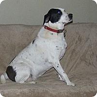 Adopt A Pet :: Mama Mags - waterbury, CT