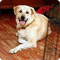 Adopt A Pet :: Summer *Adopted - Tulsa, OK